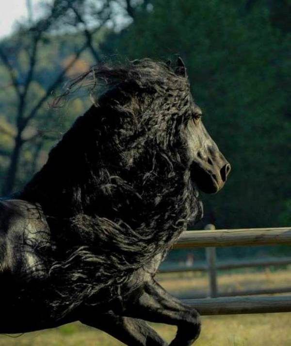 Сзади он выглядит как обычный конь. Но стоит ему обернуться — все влюбляются в его красоту!