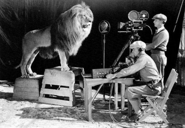 Съемка знаменитого львиного рыка на заставку MGM