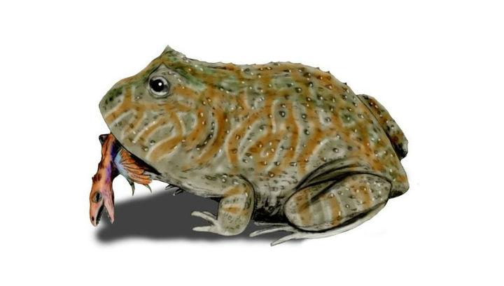 Самая большая в истории лягушка питалась динозаврами
