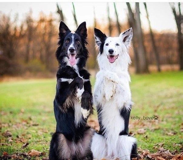 У собаки одна цель в жизни: подарить свое сердце.