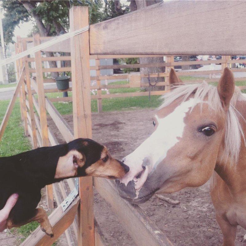 а здесь последовали их примеру собака и лошадь дружба, животные, коты, кролик, попугай, собака, черепаха