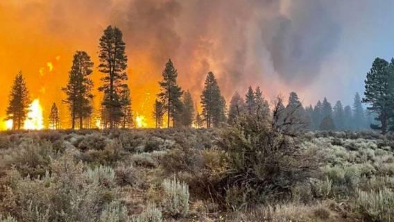 Крупные пожары охватили более 1 млн акров лесов на западе США ИноСМИ