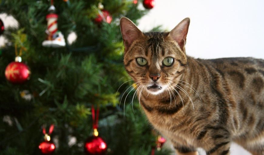 Кошки и ёлки: праздник без проблем!