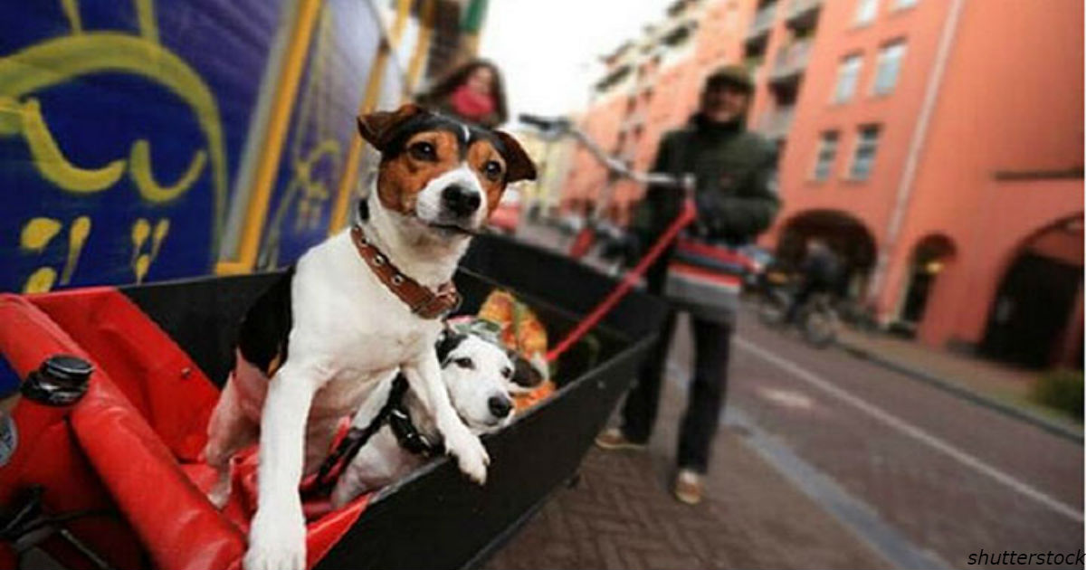 Голландия - первая страна, в которой не осталось ни одной бродячей собаки!