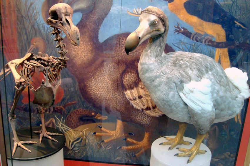 Семь вымерших животных, которых пытаются воскресить