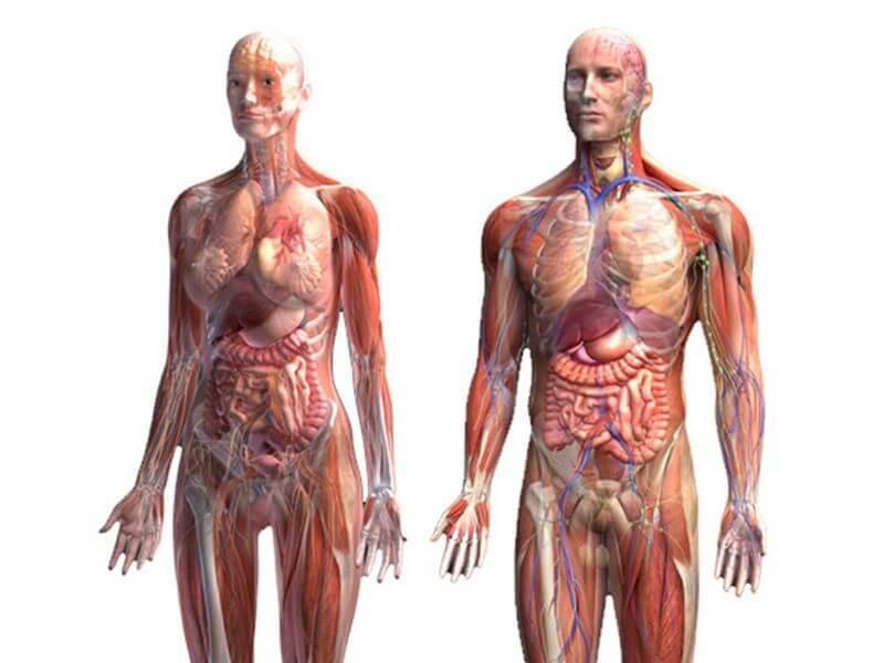 Кислотно-щелочной баланс: что важно знать здоровье,кислотно- щелочной баланс