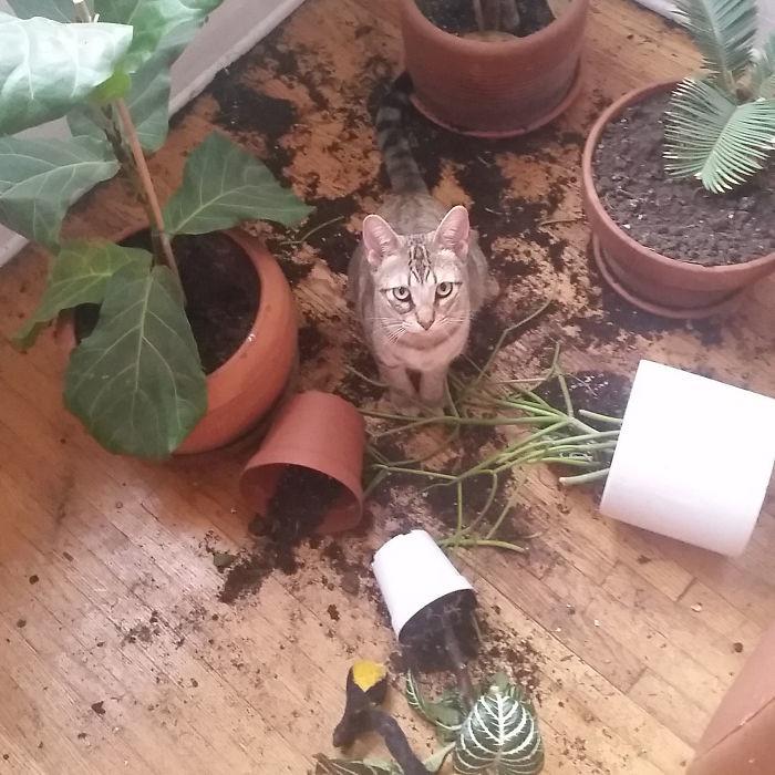 Такая вот любовь к растениям дом, животные, проступок, шалость