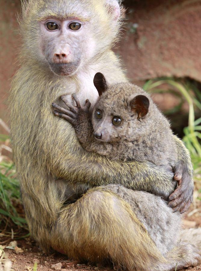 Звериная дружба животные, дружба