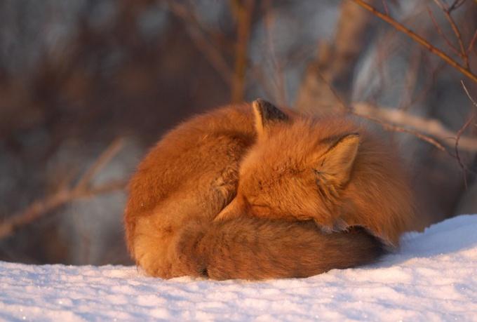 О животных с любовью. Как зимуют животные в лесу