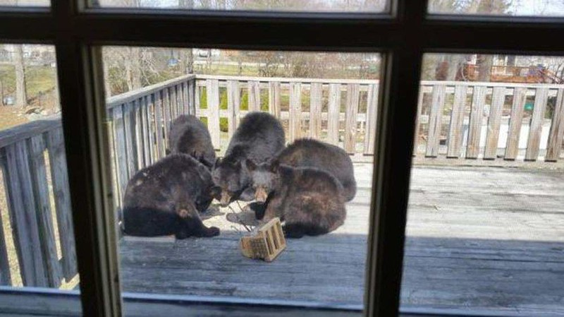 """3. Выглядываешь в окно - а там """"голуби"""" из кормушки едят россия, смешно, фото, юмор"""