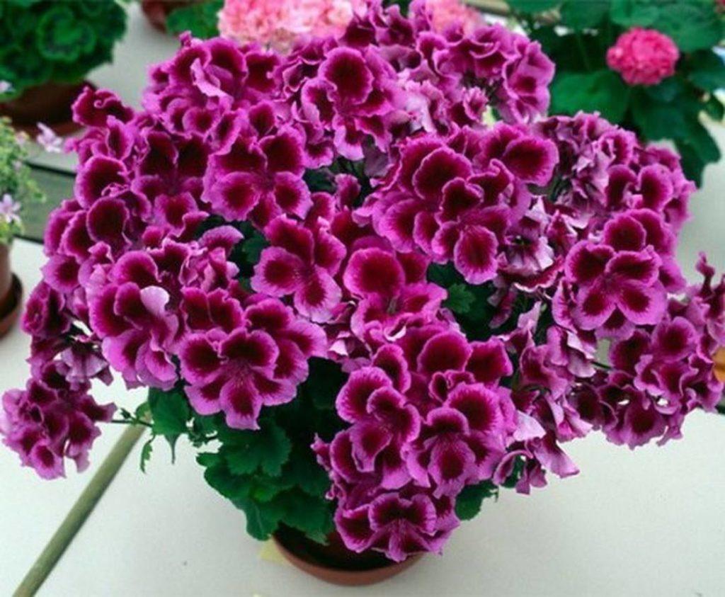 Маленькая хитрость позволит вашим цветам расти долго и цвести пышно