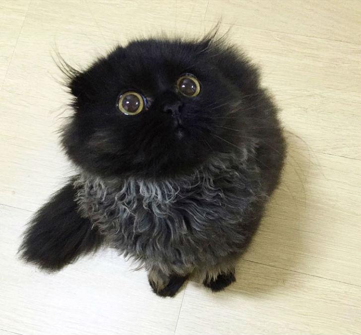 Котик, который всегда в шоке