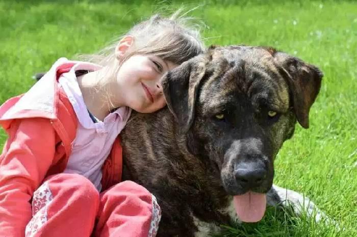 Собака спасла свою 10-летнюю хозяйку от похищения