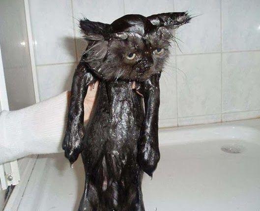 купание кота