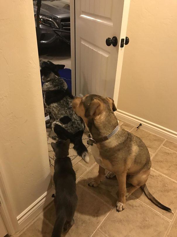 собаки которые смогла обойти человеческие правила, собаки обошли запреты владельцев