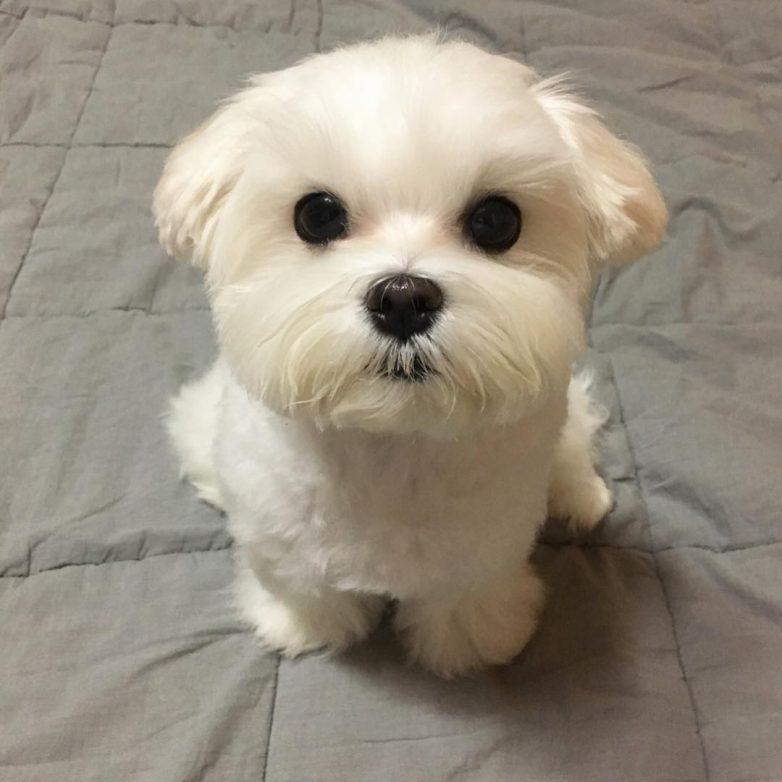 Самые очаровательные породы собак