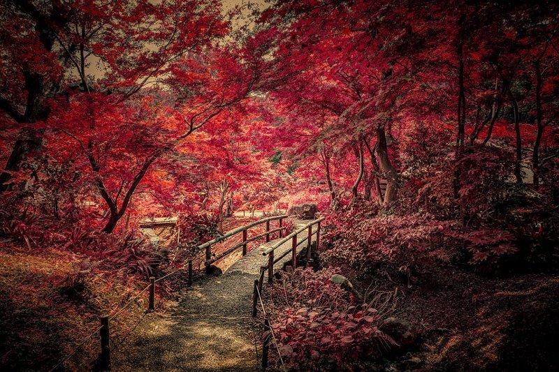 Tengoku e no hashi красота, мечта, путешествие, страна, фотография, фотомир, япония