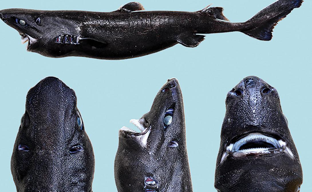 Устрашающие акулы с морских глубин