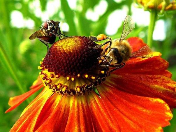 ПРИТЧА НЕДЕЛИ. Муха и пчела