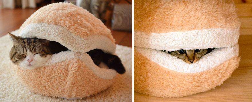 25 лучших дизайнерских идей мебели для котов