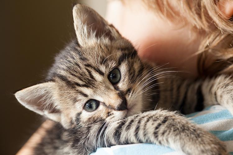 Один день из жизни кота Барсика