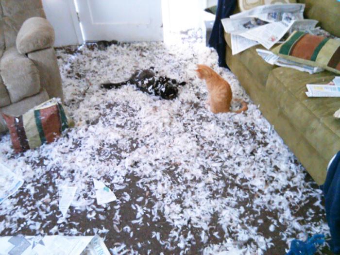 Собака расправилась с новой подушкой, а коты устроили себе веселье дом, животные, проступок, шалость