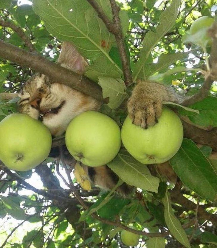 Как выглядят кони в яблоках, знают все, но у котов есть своя версия животные, коты, настроение