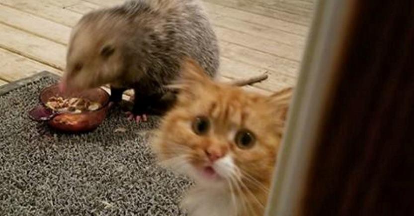 Реакция этого кота на то, как крадут его еду, заслуживает «Оскар»