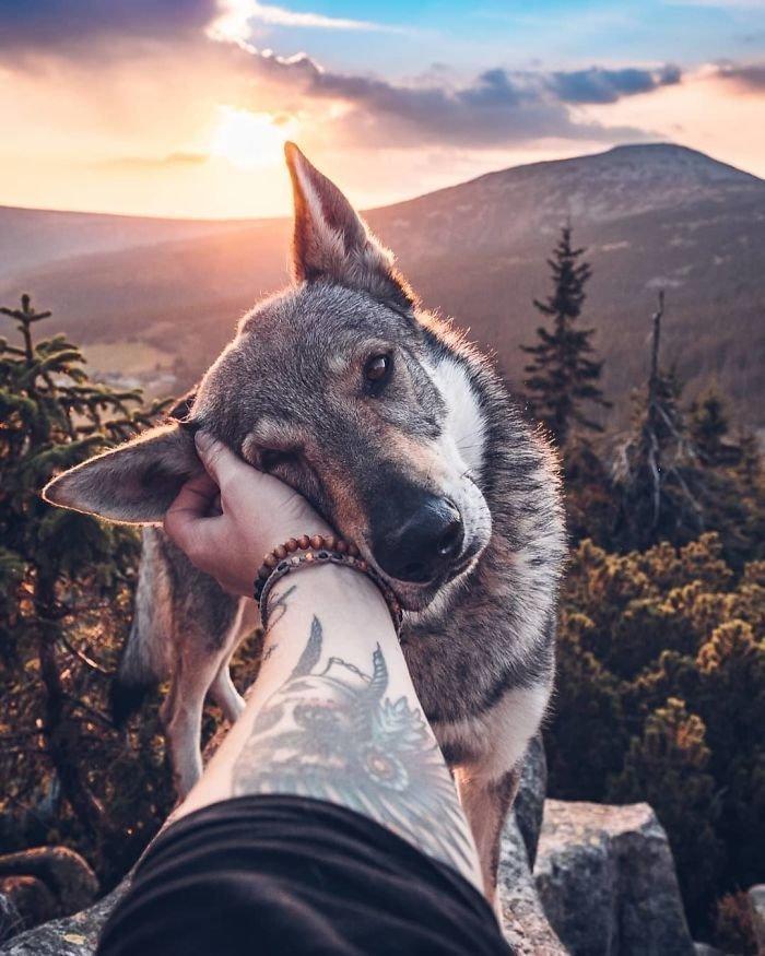 1. follow me, инстаграмм, собака, собака - друг человека, флешмоб, флешмобы. instagram, фото природы, фотограф