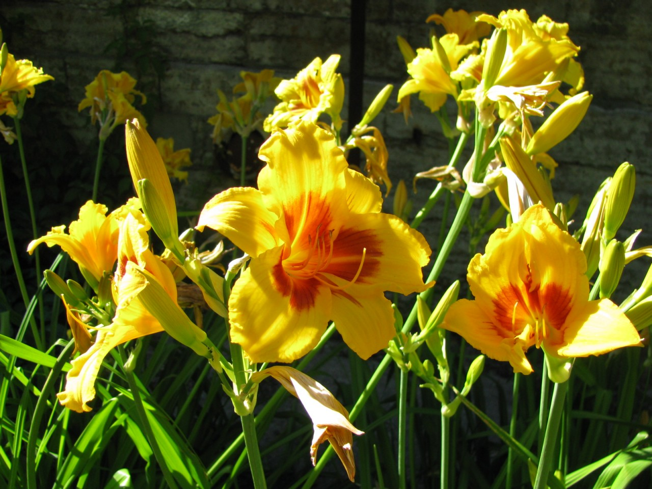 Сад цветов. В Ботаническом саду Петербурга