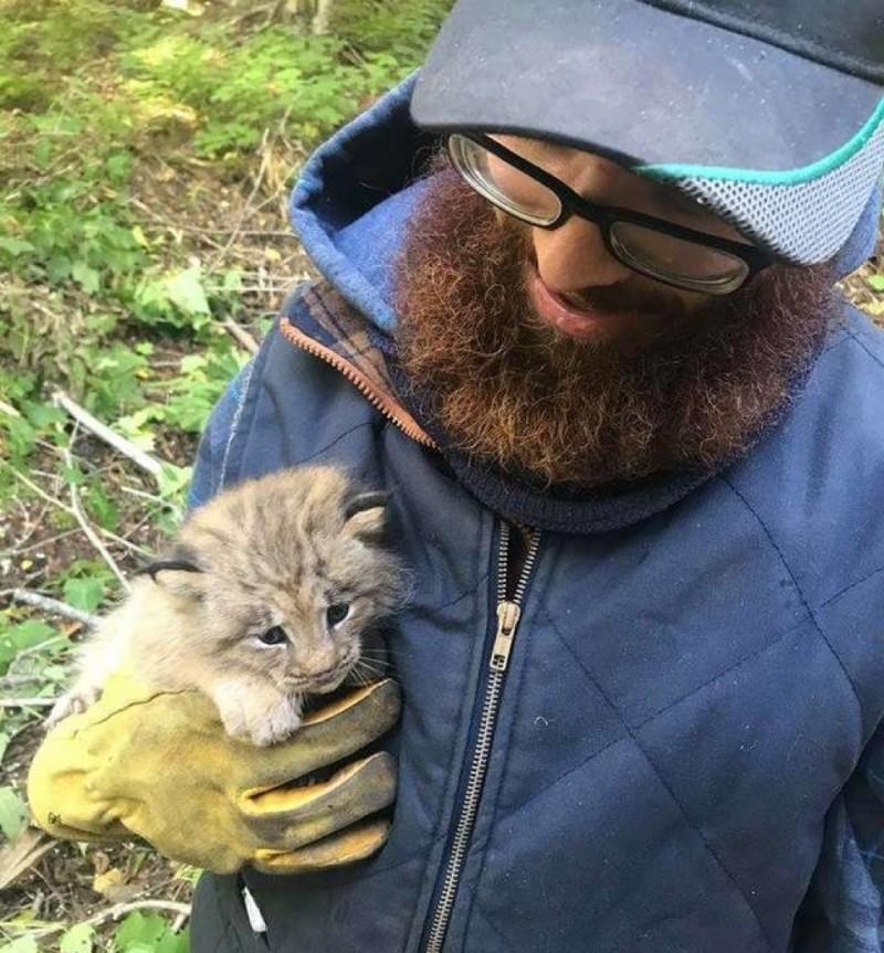 Он нашел котенка в лесу, но когда присмотрелся, то понял — это рысь!