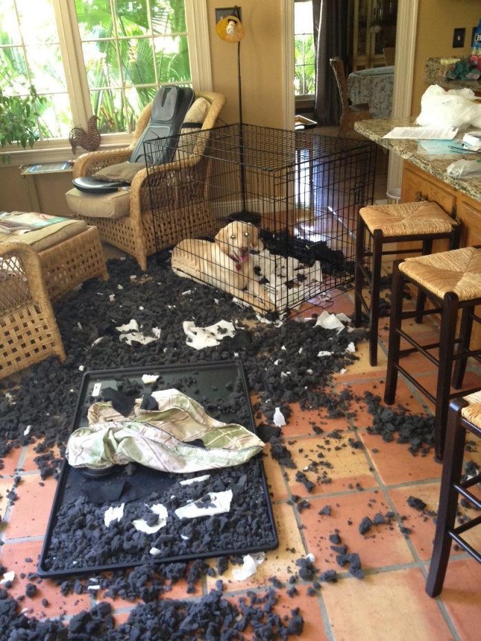 Когда хозяин пошел обедать в кафе дом, животные, проступок, шалость