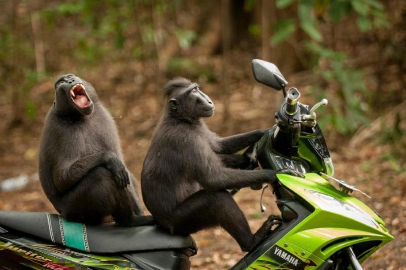 12 победителей конкурса смешных фото дикой природы. Зарядись позитивом!