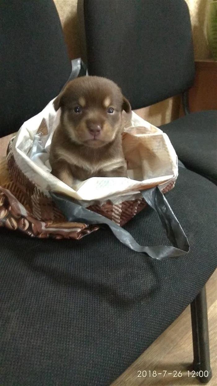 Маленький щенок стал заложником обычного пакета, а рядом лежала записка…