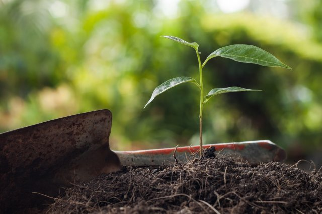 Young plant growing on brown soil with shovel on green bokeh background