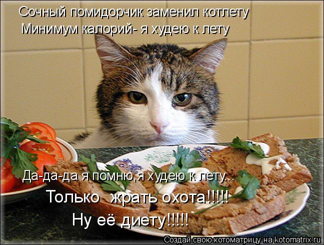 Кот К Весне Похудел.