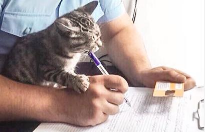 Кот-проказник стал героем фото на официальном твиттер-канале МВД