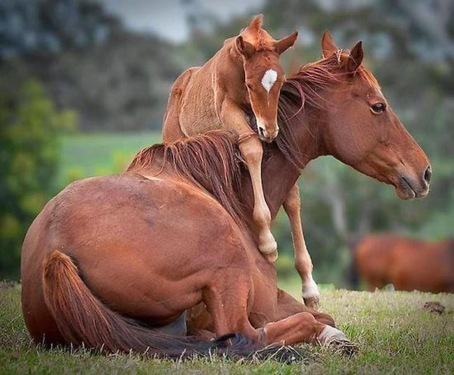 Милейшие фото материнской любви у животных.