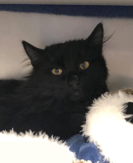 Котёнка спасли после того, как его лапки примёрзли к металлическому люку