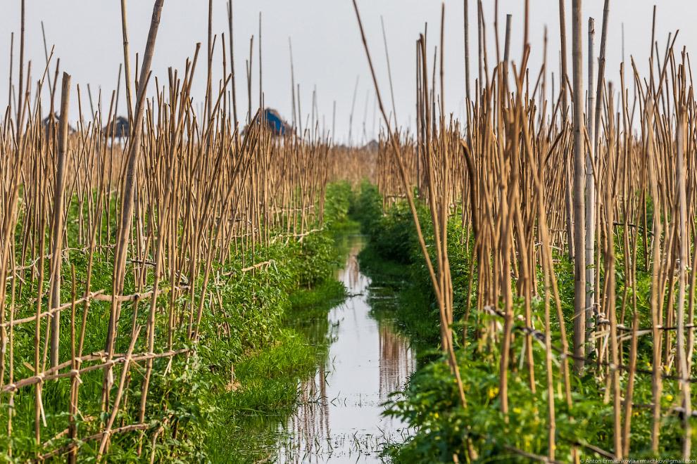Огород под водной гладью