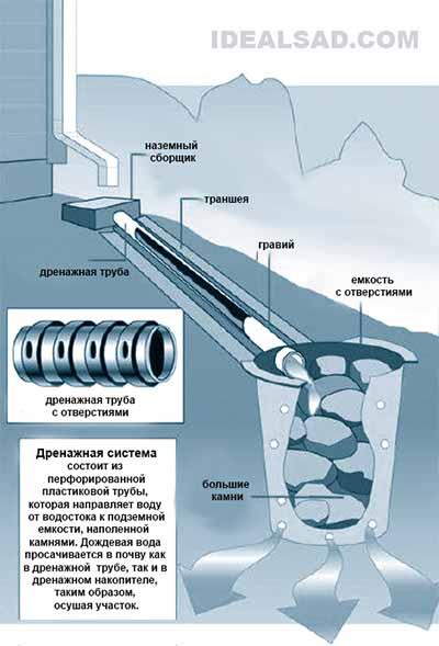 Дождевая вода на даче: сбор, отвод и использование дождевой, отвода, дождевую, можно, дренажа, участке, крыши, более, участка, только, лучше, просто, отвести, собрать, количество, фундамента, собой, такой, сделать, систему