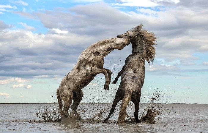 Как прекрасен этот мир: Снимки, победившие на благотворительном конкурсе «The Nature Conservancy»