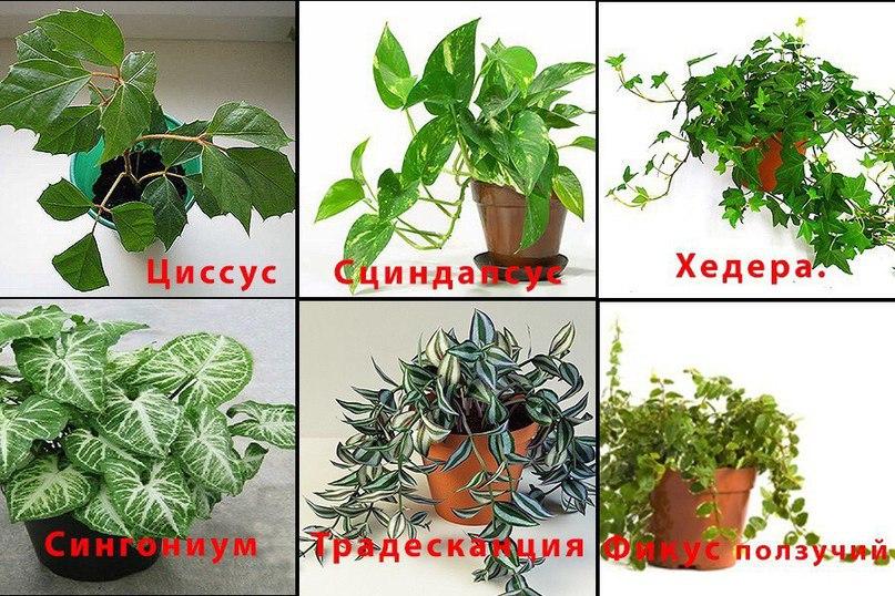 комнатное растение от а до я с картинками рассказала, что отношения