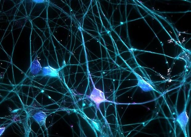 Китайцы займутся созданием полного функционального атласа головного мозга