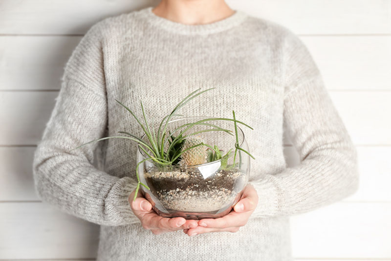 Флорариум с нуля: пошаговая инструкция как его правильно оформить