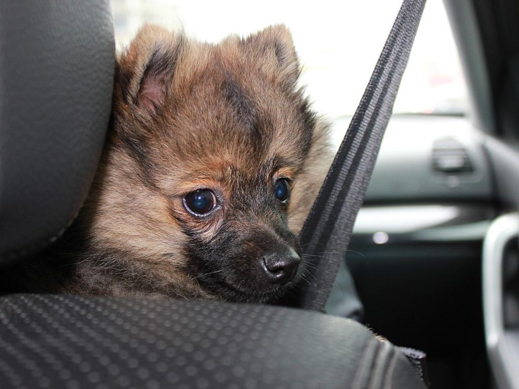 Как животные могут погубить ваш автомобиль?