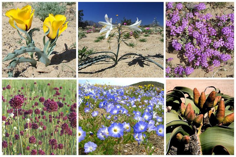 Какие цветы любят песчаную почву с фото елецкой художницы