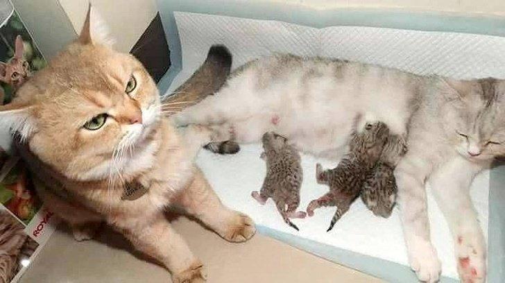 Кота явно гложут сомнения, что отец именно он животные, коты, настроение