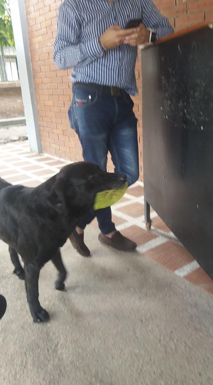 Собака научилась покупать еду за собственную валюту