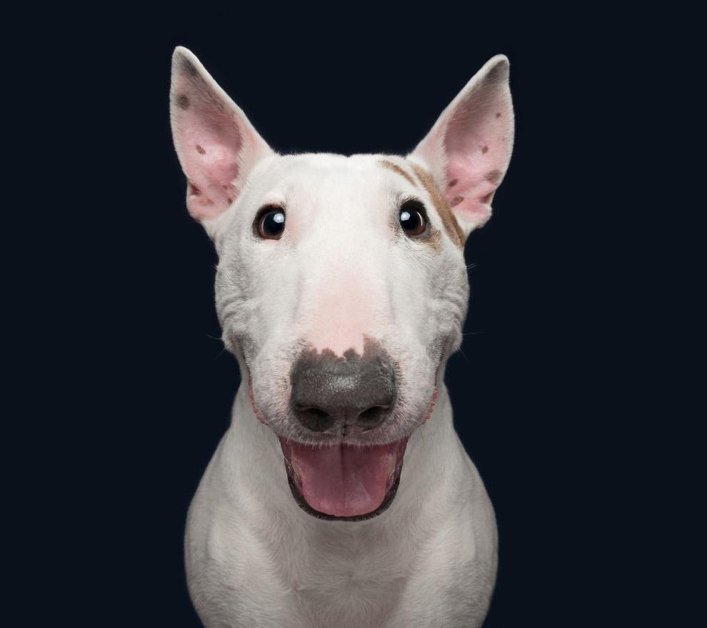 Эмоции собак в фотографиях